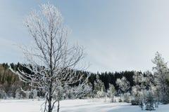 Le paysage de champ d'hiver avec les arbres givrés s'est allumé par la lumière molle de coucher du soleil - scène neigeuse de pay Images stock