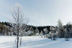 Le paysage de champ d'hiver avec les arbres givrés s'est allumé par la lumière molle de coucher du soleil - scène neigeuse de pay Photographie stock libre de droits