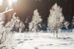Le paysage de champ d'hiver avec les arbres givrés s'est allumé par la lumière molle de coucher du soleil - scène neigeuse de pay Image libre de droits