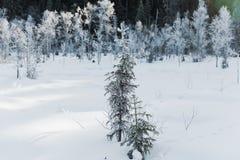 Le paysage de champ d'hiver avec les arbres givrés s'est allumé par la lumière molle de coucher du soleil - scène neigeuse de pay Images libres de droits