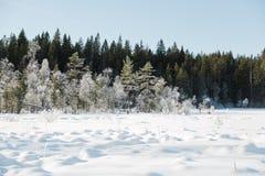 Le paysage de champ d'hiver avec les arbres givrés s'est allumé par la lumière molle de coucher du soleil - scène neigeuse de pay Photographie stock
