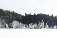 Le paysage de champ d'hiver avec les arbres givrés s'est allumé par la lumière molle de coucher du soleil - scène neigeuse de pay Photos stock