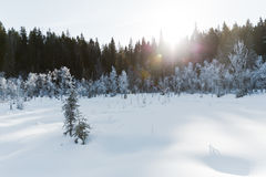 Le paysage de champ d'hiver avec les arbres givrés s'est allumé par la lumière molle de coucher du soleil - scène neigeuse de pay Photo libre de droits