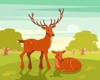 Le paysage de faune d'été, couple des cerfs communs sur le fond vert de forêt dirigent l'illustration illustration stock