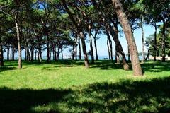 Le paysage de l'île Ste.Hélène Images stock