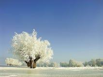 Le paysage de l'hiver, gel a couvert les arbres Photo libre de droits