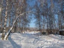 Le paysage de la forêt d'hiver Images stock
