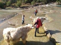 Le paysage de la montagne de neige de Yulong photographie stock libre de droits