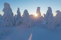 Le paysage de panorama d'hiver avec la forêt, arbres a couvert la neige et le lever de soleil matin d'hiver d'un nouveau jour Tem photos libres de droits