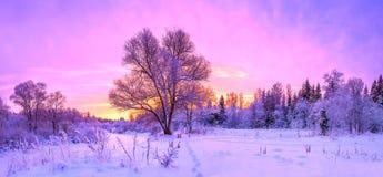 Le paysage de panorama d'hiver avec la forêt, arbres a couvert la neige et le su images stock