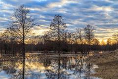 Le paysage de ressort, versent les arbres en crue d'une rivière Photographie stock