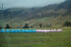 Le paysage de vue et le champ agricole avec la montagne d'alpes à Bolzano ou bozen chez l'Italie Image libre de droits