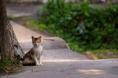 Le paysage du chat égaré Photographie stock libre de droits