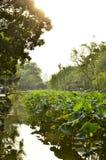 Le paysage du jardin de l'administrateur humble à Suzhou, Chine Image libre de droits