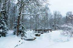 Le paysage du ruisseau et de la passerelle dans la belle forêt d'hiver ou en parc parmi les arbres sous la neige, glace image libre de droits