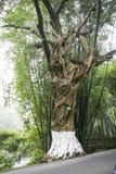 Le paysage en Emei Shan, porcelaine Images libres de droits