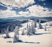 Le paysage ensoleillé d'hiver en montagnes carpathiennes avec la neige s'est recroquevillé photo libre de droits