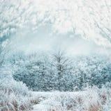 Le paysage givré de jour d'hiver avec la neige a couvert les arbres et l'herbe Photos stock