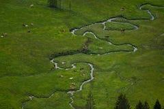 Le paysage idyllique dans les Alpes avec des vaches frôlant sur la montagne verte fraîche pâture la Bavière, Allemagne photos stock