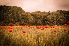 Le paysage idyllique de champ de pavot sous le coucher du soleil d'été avec la forêt soit Image stock