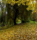 Le paysage mystique du tunnel des branches d'un arbre Photo libre de droits