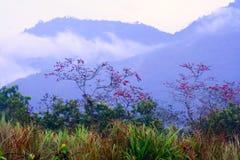 Le paysage naturel, île de Hainan Photo stock