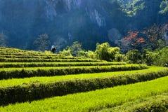 Le paysage naturel de l'île de Hainan Image stock