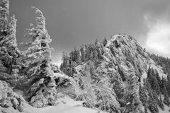 Le paysage noir et blanc de la neige a couvert des pins et des crêtes de montagne un jour nuageux d'hiver Photo libre de droits