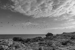 Le paysage noir et blanc des oiseaux de vol image libre de droits