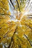 Le paysage pittoresque avec des troncs d'arbre contre le ciel au su Photos stock