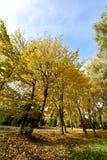 Le paysage pittoresque avec les arbres d'or sur la pelouse dans l'autum Photos stock