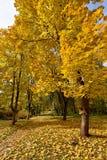 Le paysage pittoresque de l'arbre d'érable et du chemin couverts Photographie stock