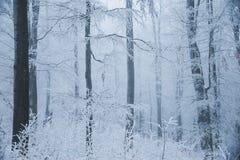 Le paysage renversant, les arbres givrés s'est embranché dans une forêt Images stock