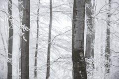 Le paysage renversant, les arbres givrés s'est embranché dans une forêt Photo libre de droits