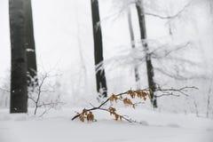 Le paysage renversant, les arbres givrés s'est embranché dans une forêt Image stock