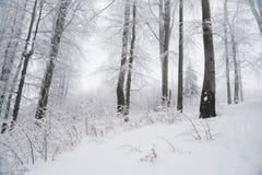 Le paysage renversant, les arbres givrés s'est embranché dans une forêt Photographie stock