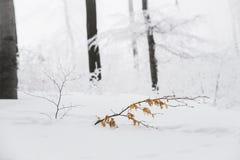 Le paysage renversant, les arbres givrés s'est embranché dans une forêt Image libre de droits