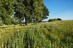 Le paysage rural avec l'arbre de tilleul, le crucifix et le pavot mettent en place dans le jour ensoleillé Image stock
