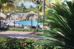 Le paysage tropical avec une piscine et des paumes comme fond Photographie stock libre de droits
