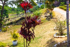 Le paysage vert de paysage de parc naturel à YS tombe, la Jamaïque image stock