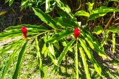 Le paysage vert de paysage de parc naturel à YS tombe, la Jamaïque images stock
