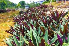 Le paysage vert de paysage de parc naturel à YS tombe, la Jamaïque photos libres de droits