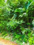 Le paysage vert de paysage de parc naturel à YS tombe, la Jamaïque photo libre de droits
