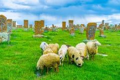 Le pecore al cimitero di Noratus Fotografia Stock