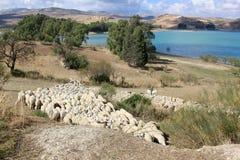 Le pecore del witd del pastore si avvicinano al lago in Andalusia Fotografia Stock Libera da Diritti