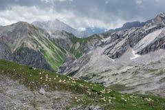 Le pecore in montagne delle alpi in Baviera, Germania Fotografia Stock Libera da Diritti