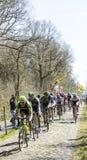 Le Peloton dans la forêt d'Arenberg- Paris Roubaix 2015 Photo libre de droits