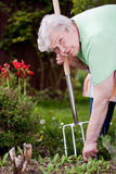 Le pensionné coupe des herbes dans le jardin Photo libre de droits