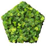 Le Pentagone a fait à partir des feuilles vertes d'isolement sur le fond blanc 3d rendent Photographie stock