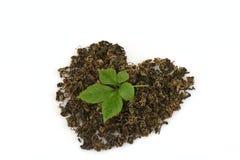Le pentaphyllum chinois Thunb Makino de Gynostemma de nom de Jiaogulan sec et les feuilles ont arrangé dans une forme de coeur Photos libres de droits